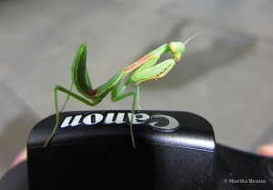 praying-mantis-with-camera